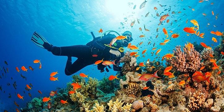 Immersioni in Egitto e Mar Rosso